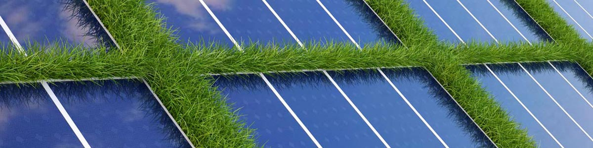 Photovoltaic parks vegetation management