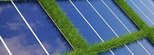 Taiere iarba parcuri solare